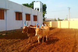 ploughing-land